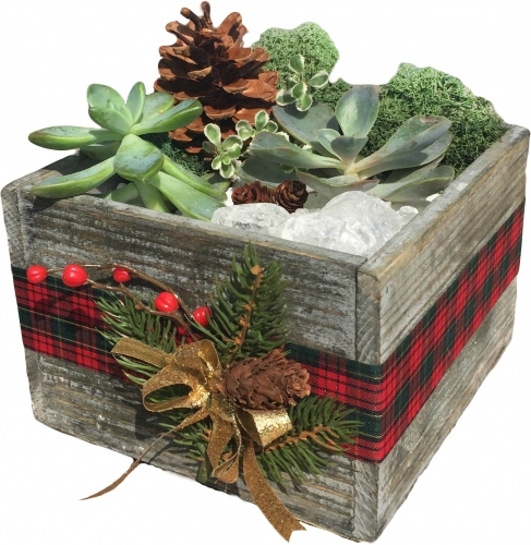PlantNite- Holiday Box Get 45% off with Code! on modern plant box, house tissue box, winter plant box,